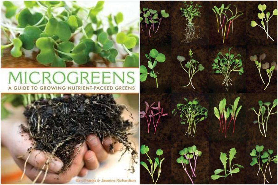 Photo from Microgreens - A guide to growing nutrient packed greens