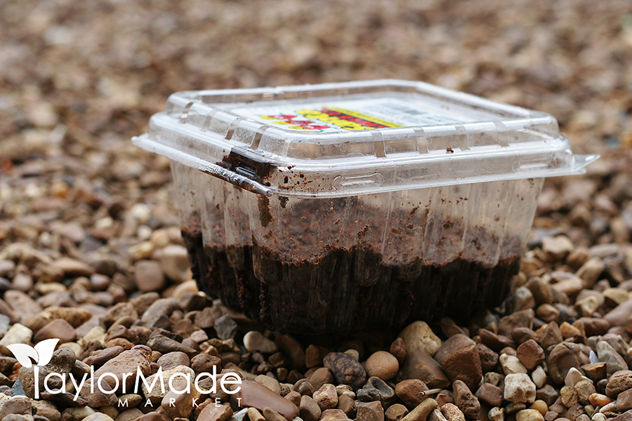 microgreen container