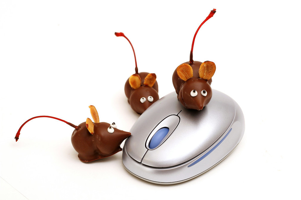 shot of a chocolate mice on a mouse