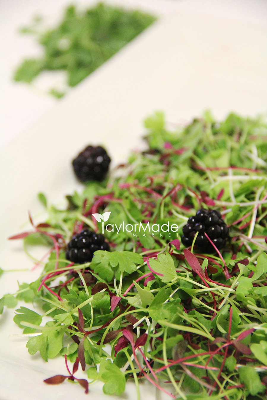 Microgreen Blackberry