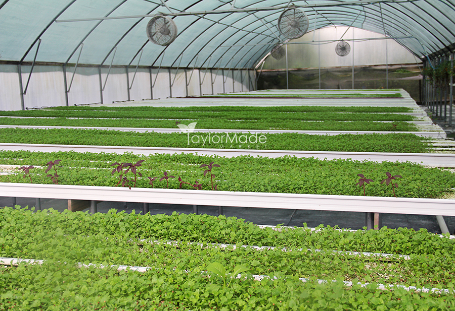 microgreen greenhouse 3