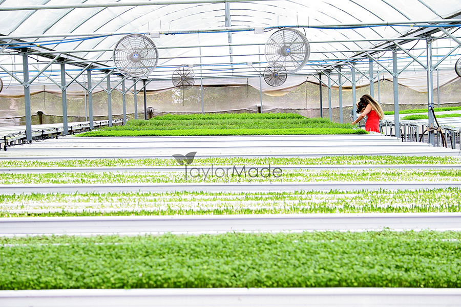 microgreen greenhouse andrea