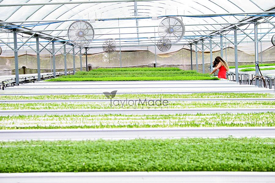 microgreen greenhouse andrea