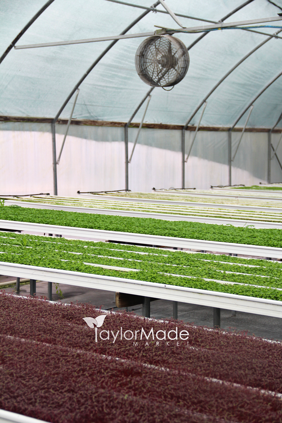 microgreen greenhouse vertical