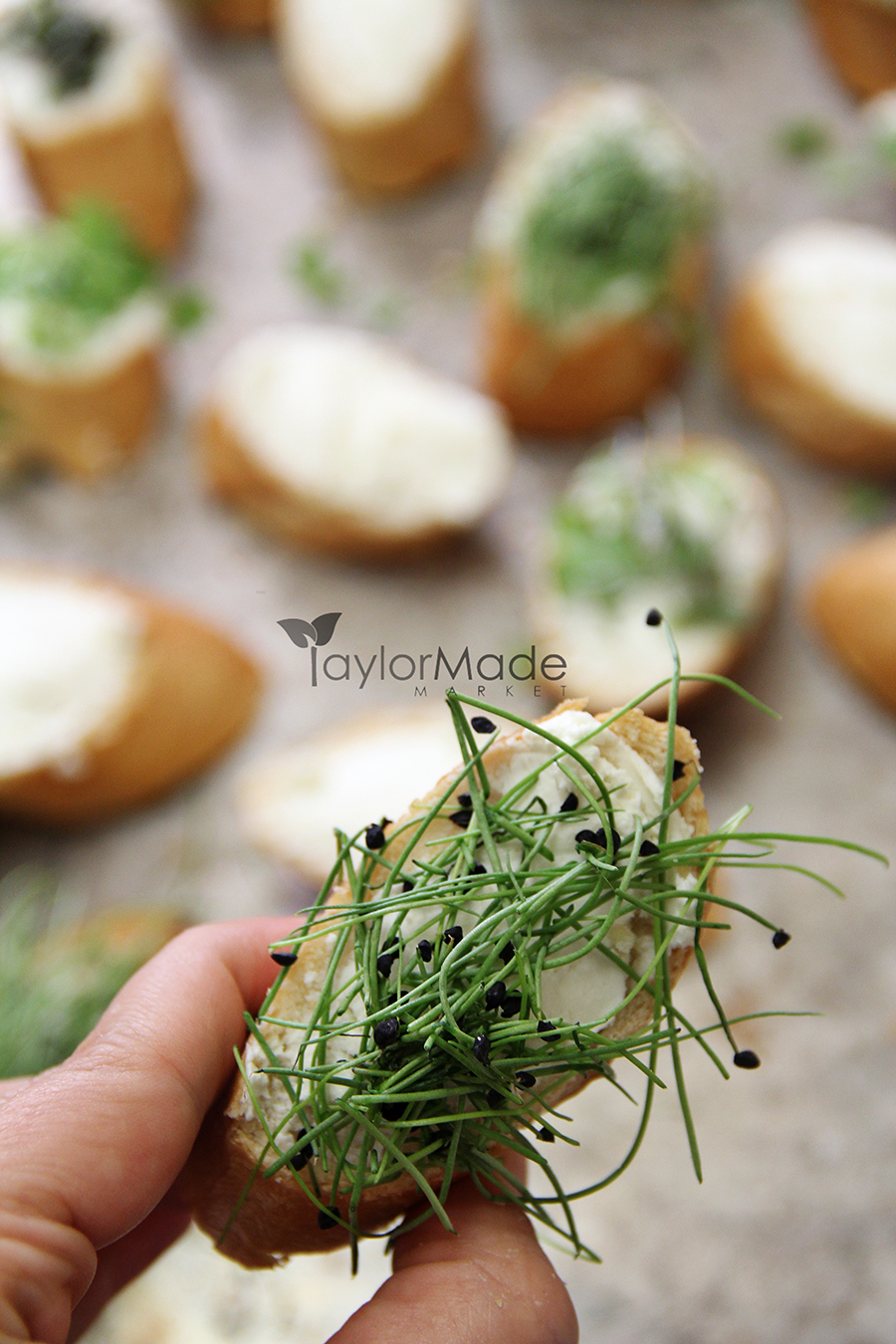 microgreen onion crostini