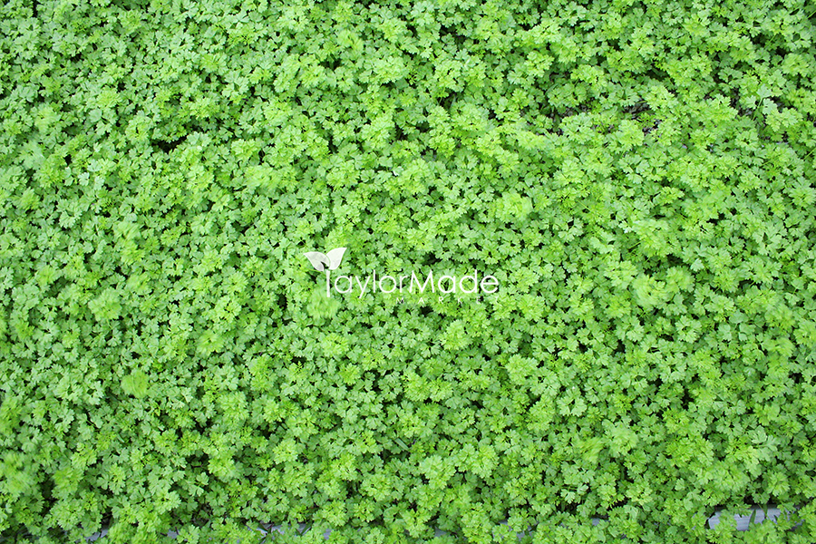 microgreens 001