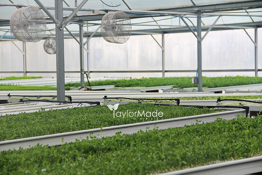 microgreens greenhouse inside